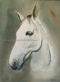 Monty, original watercolour painting by Robin Storey