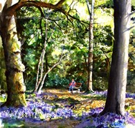 Blue Bell Wood, original watercolour painting by Robin Storey