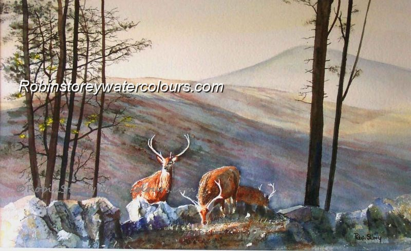 Highland Deer ,original watercolour by Robin Storey